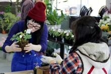 3月14日(土) 「雪割草の春の寄せ植え教室」開催♪