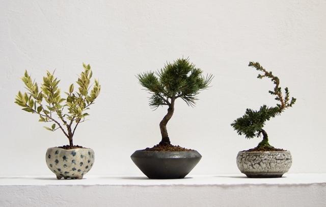 陶芸作家の器で小さな盆栽