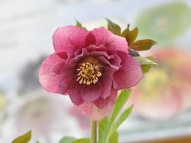 春花・舞花の様子をご紹介します