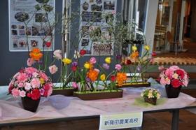 「春花舞花」春を告げるフラワーアレンジメント