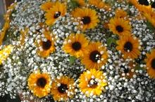 新潟市産の夏を感じる花を飾ろう!!