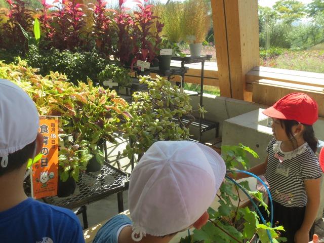 団体プログラム 「食育・花育センター体験ラリー」