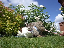 キラキラおさんぽ~ウサギをさがそう~
