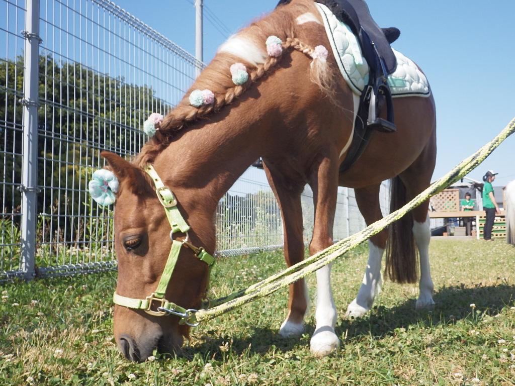 ポニー乗馬体験のご案内