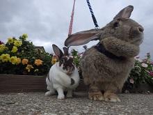 ウサギがキラキラガーデンに!