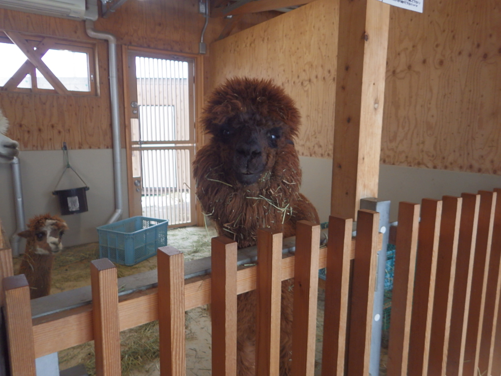 今日の新潟市動物ふれあいセンター