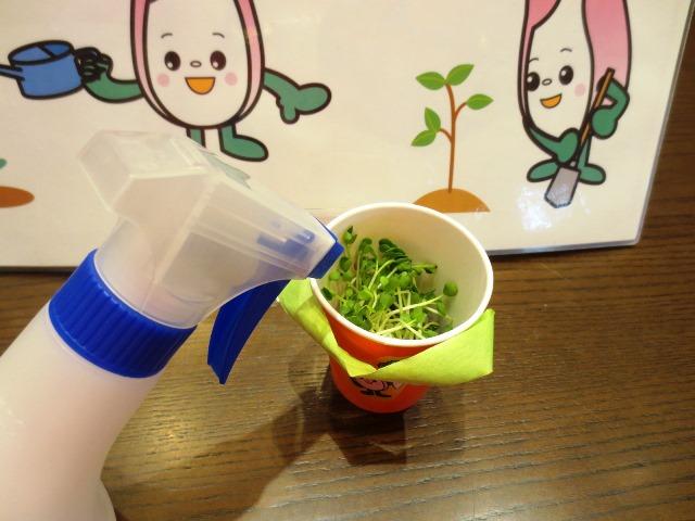 食育ランド「野菜のたねをまこう!!」
