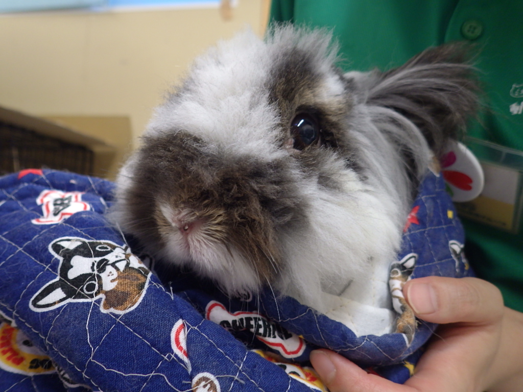 ウサギふれあい体験を開催しました!