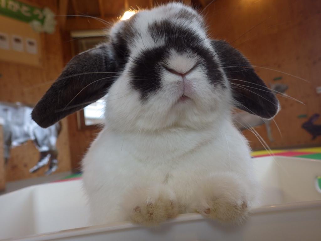 ウサギふれあい体験!