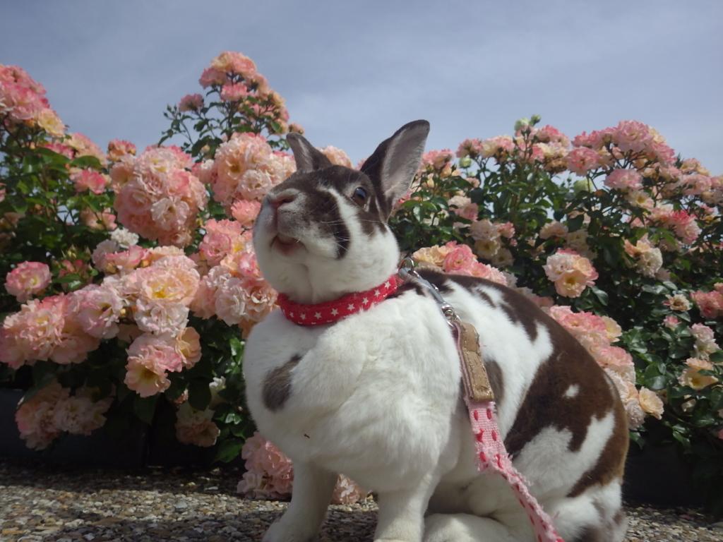 ウサギがキラキラガーデンに行きました!