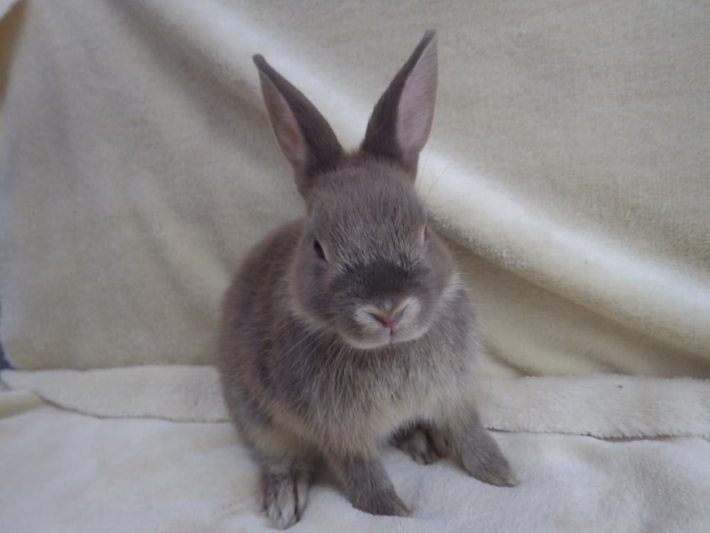 新しいウサギが仲間入りしました!