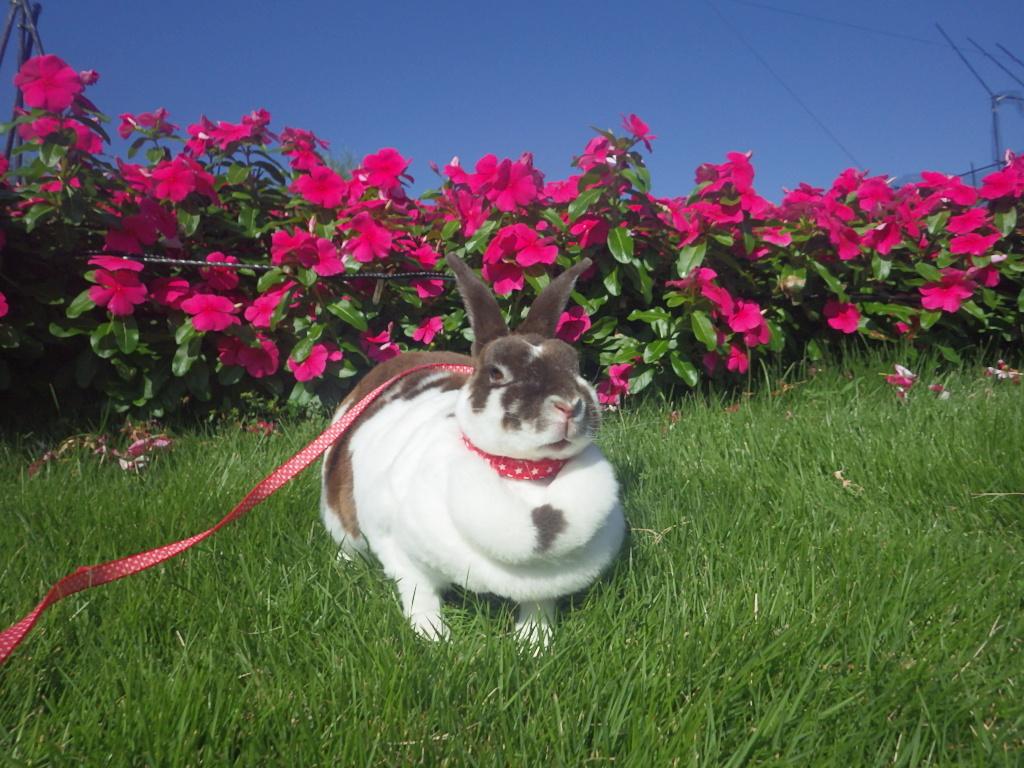 キラキラおさんぽ~ウサギを探そう~を開催しました!
