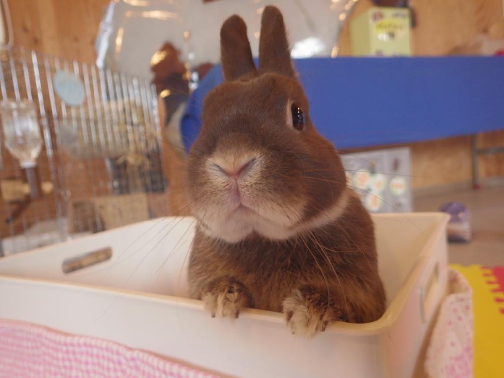 ウサギのふれあい体験!
