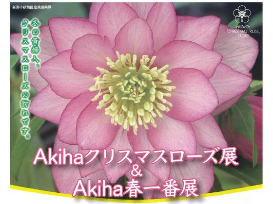 3/1(日)【Akihaクリスマスローズ展】中止(令和2年2月29日更新)