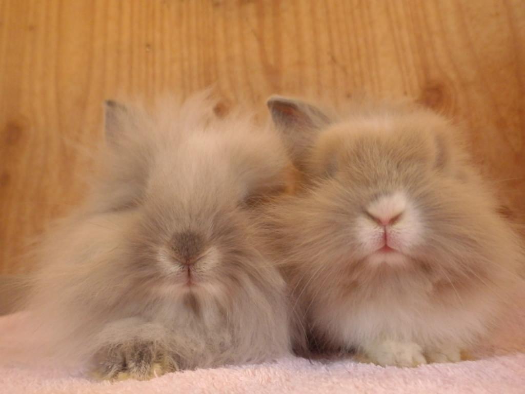新しいウサギの一般公開が始まりました!