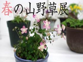 【春の山野草展】開催