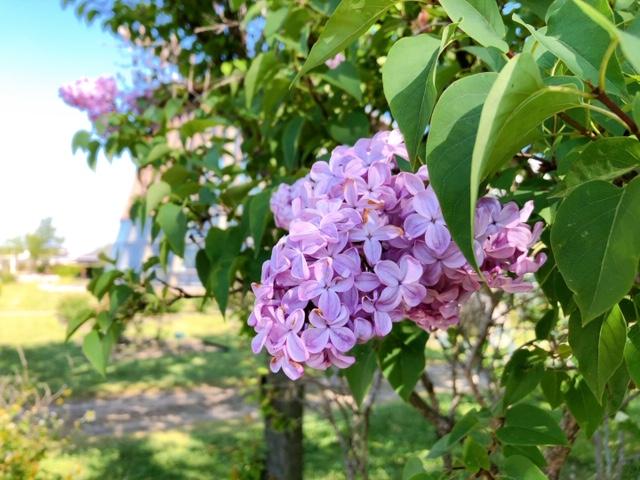春と初夏の花たち