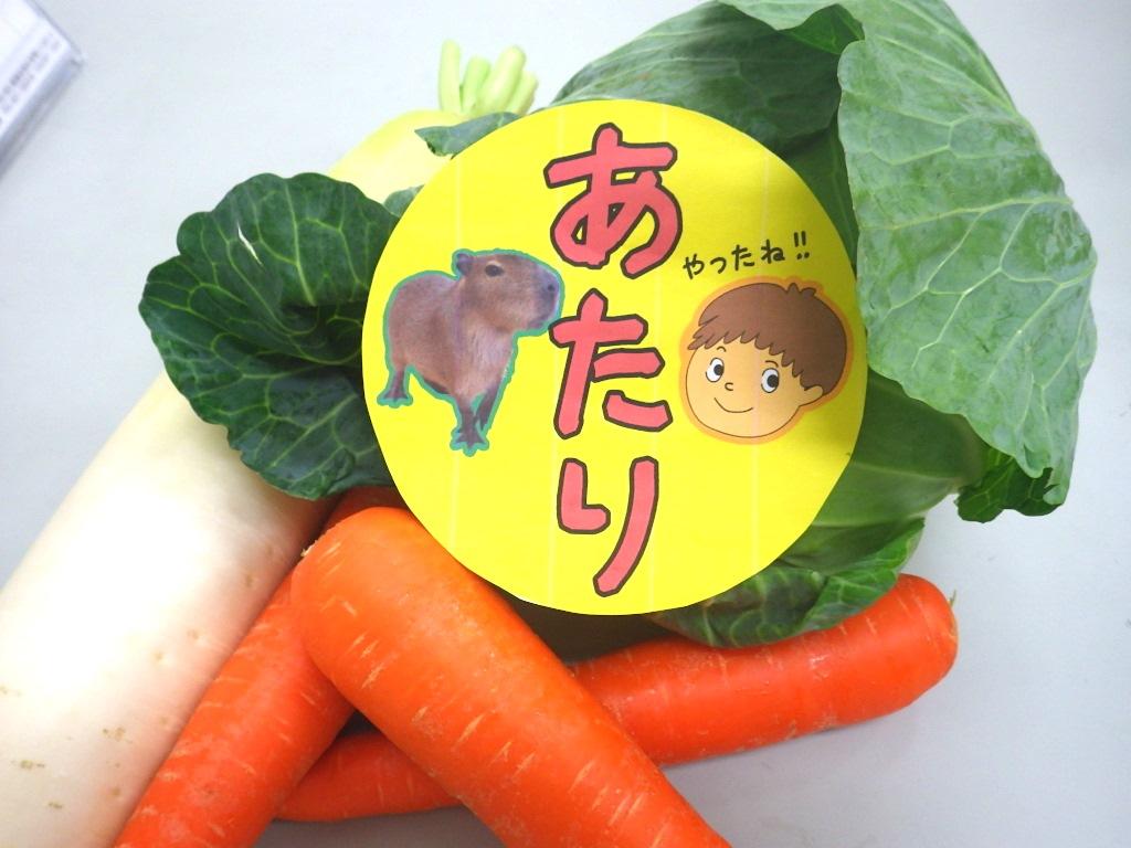 当たり付き アルパカ・ヒツジ・ヤギ野菜えさやり体験