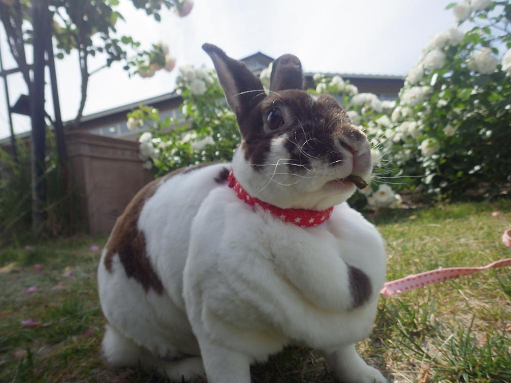 ウサギおさんぽ体験を開催しました!