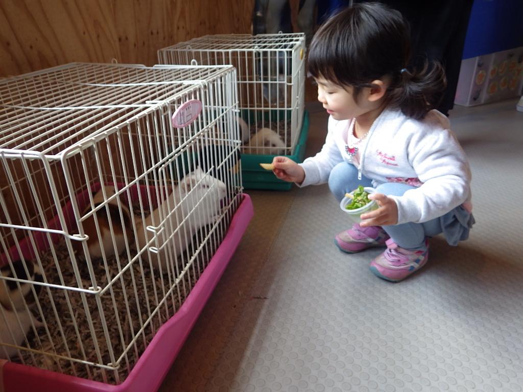 モルモット&ウサギ 当たり付きえさやり体験