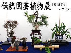「伝統園芸植物展」のご案内