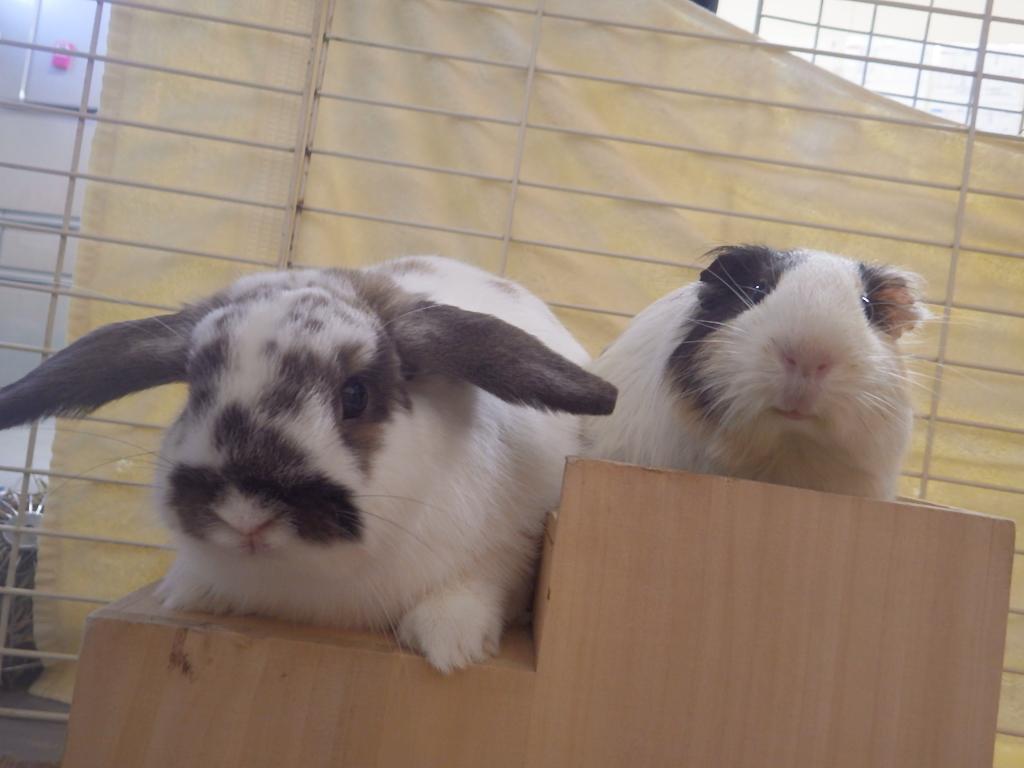 モルモット&ウサギ検定を開催しました!