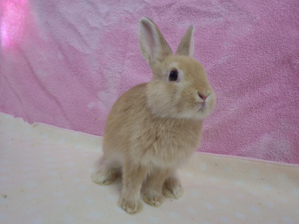 新しいウサギが仲間入りしました!!