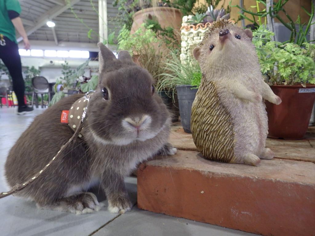 キラキラおさんぽ~ウサギを探そう~